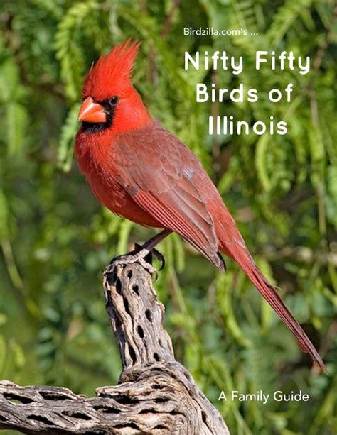 nifty fifty birds of illinois by sam crowe blurb books uk
