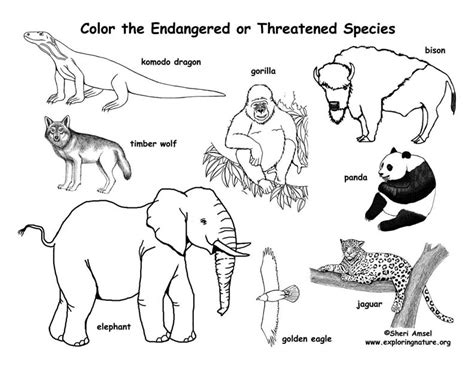 coloring pages of dangerous animals endangered animals coloring page