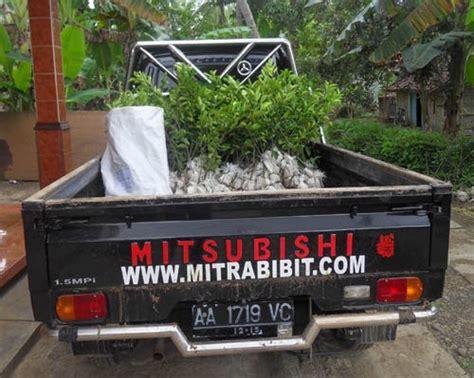 Jual Bibit Cendana Yogyakarta cv mitra bibit pengiriman bibit jeruk nipis ke yogyakarta
