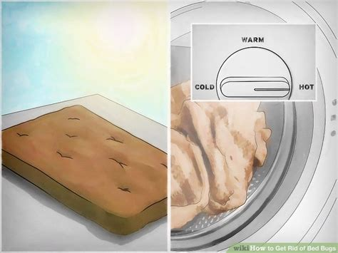 how you get bed bugs how to get rid of bed bugs with pictures wikihow