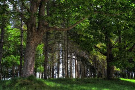 wallpaper 4k forest cool nature desktop backgrounds free spring forest 4k