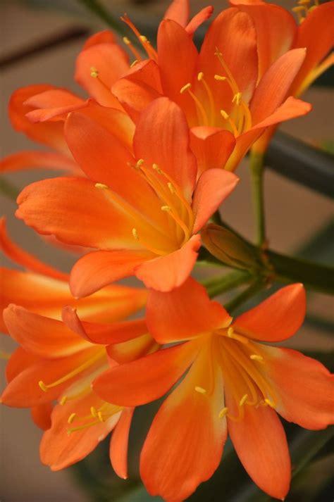 pretty orange 25 best ideas about orange flowers on pinterest orange
