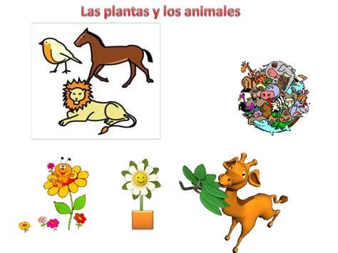 imagenes animales y plantas las plantas y animales