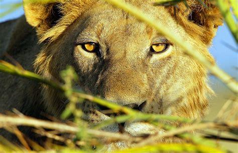 okavango delta  images pictures