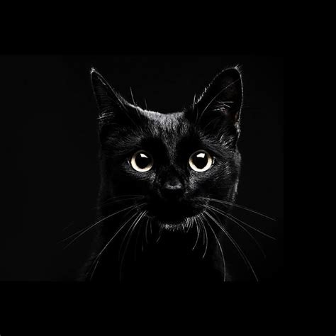 Cat Wallpaper Iphone All Hp black cats live wallpaper android apps on play