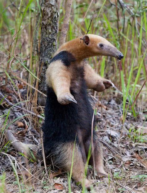top  smelliest animals   world  mysterious world