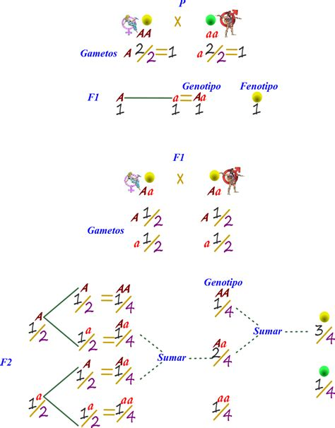 cadenas de markov resumen ciencias de joseleg resumen del cruce monoh 237 brido por la