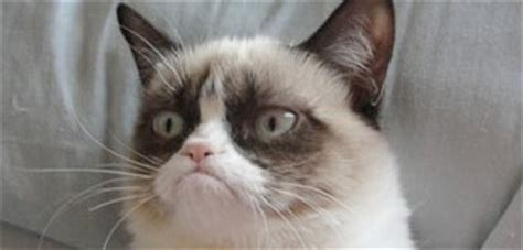 Original Grumpy Cat Meme - humorous memes page 233 talk about marriage