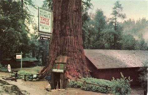 famous tree houses the world famous tree house california california