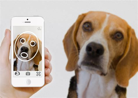 pet technologies pip the pet recognition app re uniting lost pets with