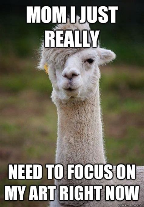 Llama Meme - the best llama drama memes on the internet