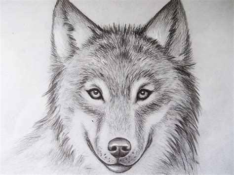 Cool Animal Drawings Cool Drawings Of Animals Pencil Art Drawing Drawings Inspiration Animal Pictures For To Draw