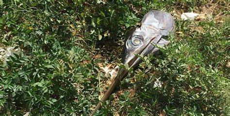 pesce testa di la testa di un pesce abbandonata per strada 232 spuntata in
