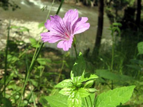 fiori bosco parco regionale della valle lambro galleria