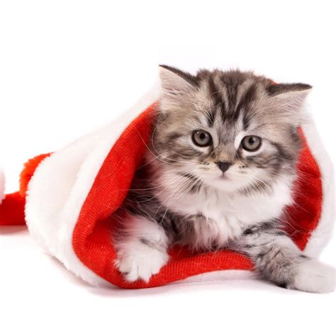 wallpaper cats christmas ipad wallpapers free download christmas pets ipad