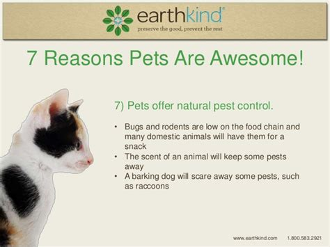 7 Reasons To A Pet by 7 Ways Pets Can Improve Your