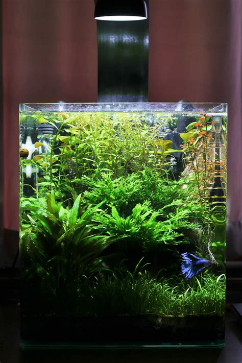 nano planted tank light attempt planted nano tank page 6 the planted