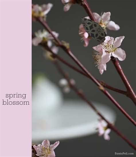 Pell Blossom pretty in pink sania pell freelance interior stylist