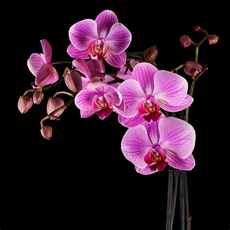 how to care for a how to care for orchids pollennation