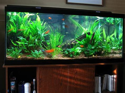 Fish Decorations For Home by Ideas For An Amazing Aquarium Banggood