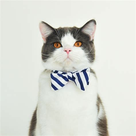what s nautical cat bow ties by cat in berlin