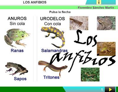 insectos anfibios y reptiles chicotes en quot red quot ados 2 186 noviembre 2013