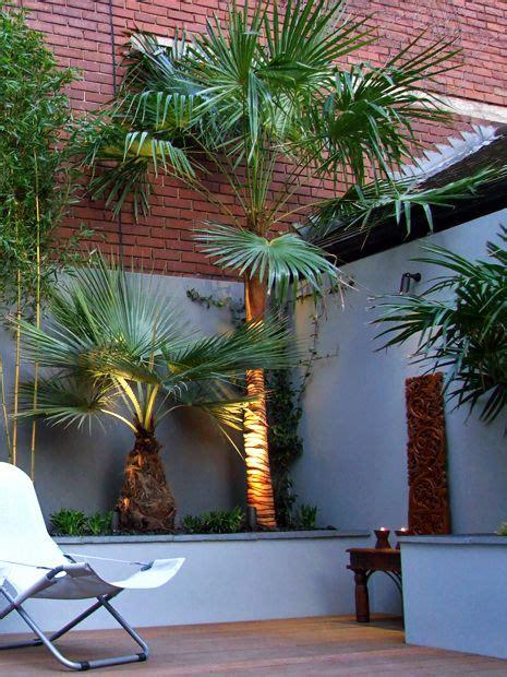 tropical garden designs modern exotic outdoor space london