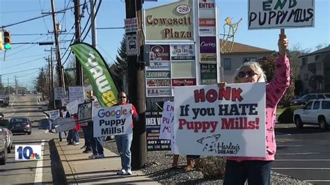 puppy stores in ri protesters target ri pet store owner responds wjar