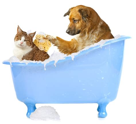 2 dogs in a bathtub 7th annual dog wash fitchburg chamber visitor business