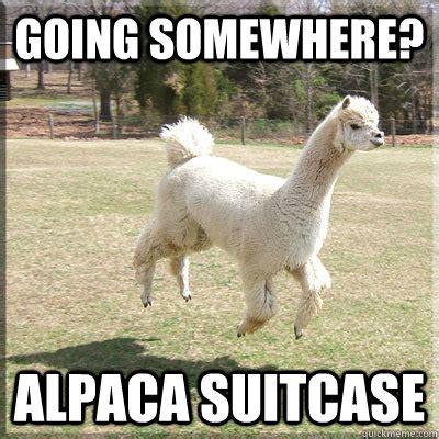 Alpaca Memes - alpaca lunch meme memes