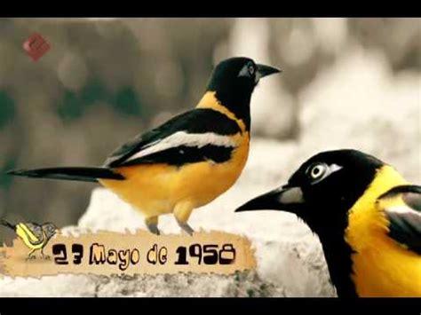 imagenes simbolos naturales de venezuela s 237 mbolos naturales el turpial youtube