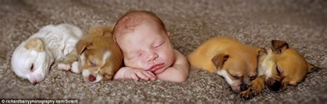 Richards Sleeps With Dogs by Photography Dreamy Baby And Four Sleeping Chihuahuas A
