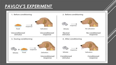 pavlov experiment classical conditioning by ivan pavlov