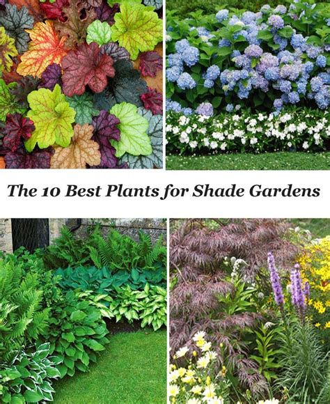 Patio Plants For Shade by 25 Best Ideas About Shade Garden Plants On