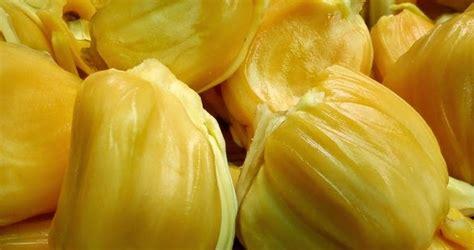 aneka resep makanan  buah nangka aneka resep indonesia