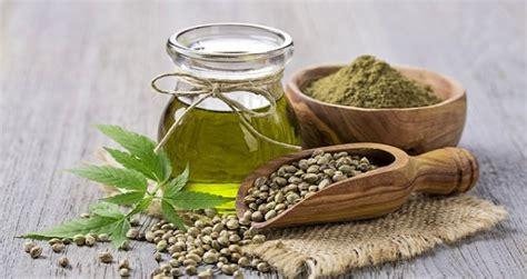 canapé sits olio di canapa propriet 224 e controindicazioni benessere