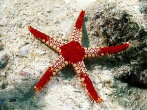 best wallpapers starfish wallpapers