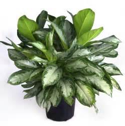 the garden plot tips for bringing your houseplants inside