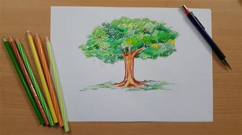 color trees tutorial how to draw a tree and color it using pencil