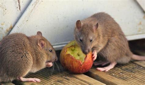 bikin hati iba ibu  anak  terpaksa makan buah sisa