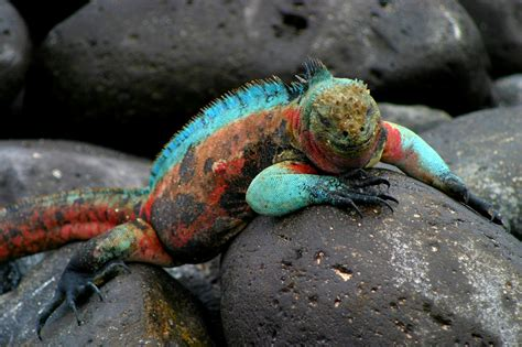 6 Amazing Animals From The Galapagos Islands by Galapagos Islands Weiner Elementary