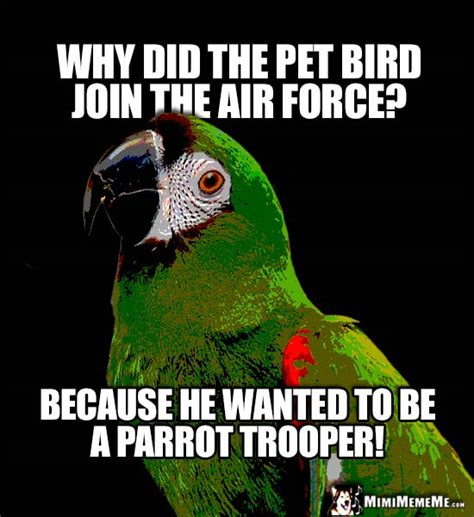 Parrot Meme - funny parrot says why did the pet bird join the air force