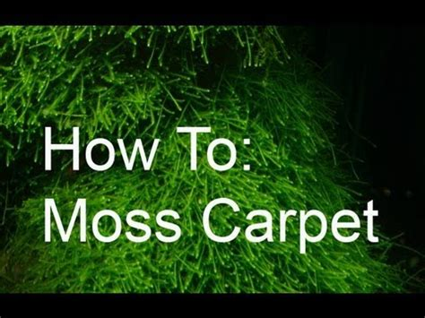 how to make a moss rug how to moss carpet