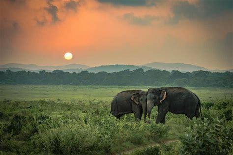 elephant friendly tea garden assam holidify
