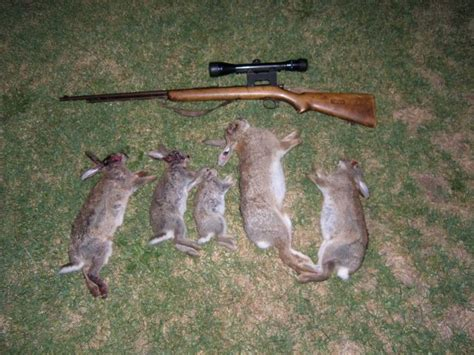 how to your to hunt rabbits what s the right time to hunt the rabbit the best and most complete tips