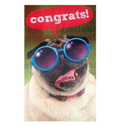 pug congratulations pug congratulations card available at www ilovepugs co uk post worldwide pugs are