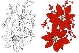 poinsettia color poinsettia flower coloring page free stock photo