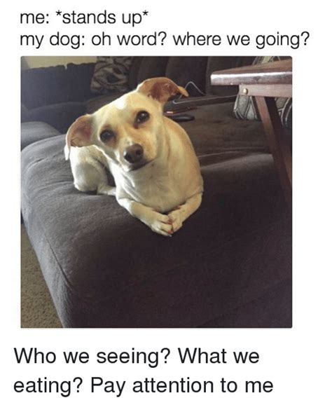 Pay Attention To Me Meme - 25 best memes about pay attention pay attention memes