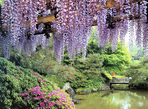 Travel Trip Journey Kawachi Fuji Gardens Japan Flower Garden Japan