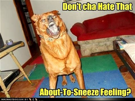 dogs sneezing 27 dogs in mid sneeze